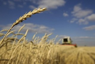 FILE PHOTO - A combine harvests wheat in a field near the town of Akkol, some 110 km (68 miles) north of the capital Astana October 11, 2011. REUTERS/Shamil Zhumatov