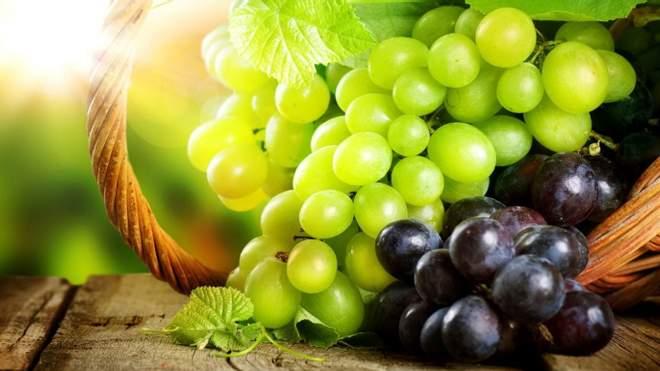 العوامل الجيدة لحصاد العنب