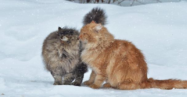 القطط والمعتقدات الشعبية