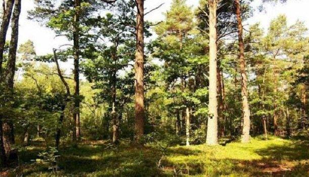 ايكيا تشتري الاف الهكتارات من الغابات