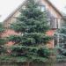 زراعة الأشجار بالقرب من المنزل يقلل من خطر الإصابة بالاكتئاب لدى البشر...دراسة علمية
