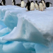 علماء أوكرانيون يبحثون في التغيرات المناخية في القارتين القطبية الجنوبية والشمالية