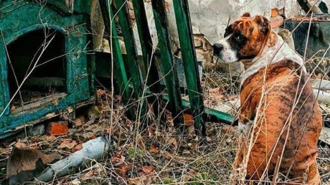 منازل مدمرة ومقتنيات مهجورة هذا ما خلفته الحرب في دونباس
