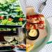 نقدم لك افضل 7 مطاعم لتذوق الطعام في كييف
