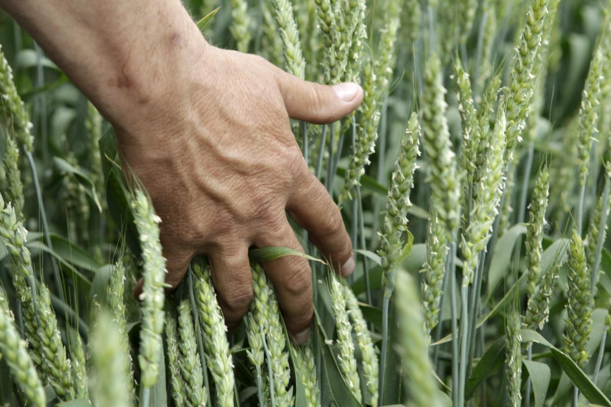 وزارة السياسة الزراعية تقرر تأجيل استعادة العمل حتى مارس