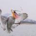 وفاة مئات طيور البجع بسبب انفلونزا الطيور في السنغال