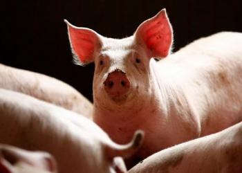 انخفاض مبيعات المضادات الحيوية الحيوانية في أوروبا