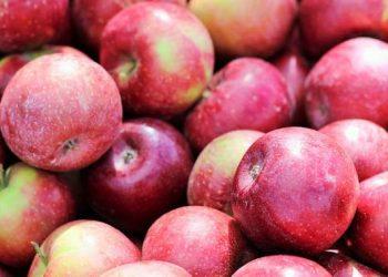 ايطاليا تقدم تفاح بعمر افتراضي طويل