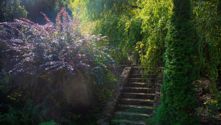 حديقة كريمينتس النباتية.