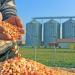 شركة صينية تعمل على بناء مصنع لمعالجة الذرة في أوكرانيا
