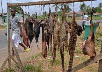 نيجيريا تفتح سوقا لبيع الحيوانات البرية