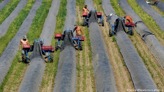 العمالة الاوكرانية في المانيا