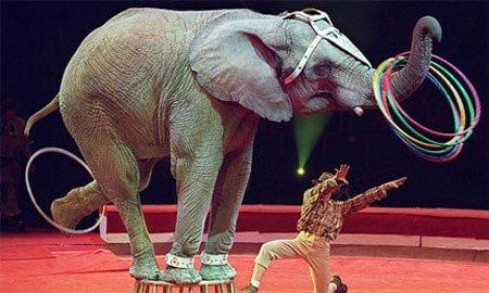 الفيل تعبيرية