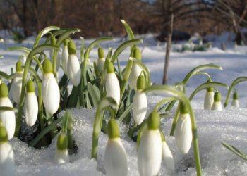 بدء موسم الربيع في اوكرانيا
