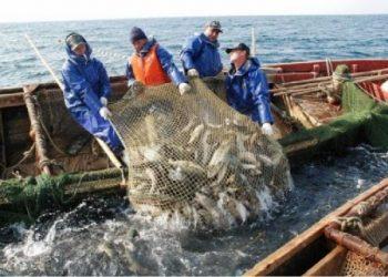 حقق مصدرو الأسماك الأوكرانيون عام 2020 زيادة بنسبة 13٪ عن العام السابق له