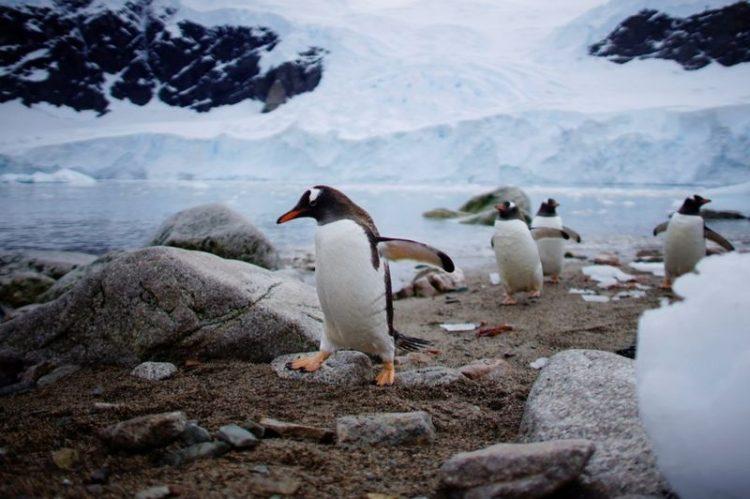 طيور البطريق والجمال الجليدي للقارة القطبية الجنوبية