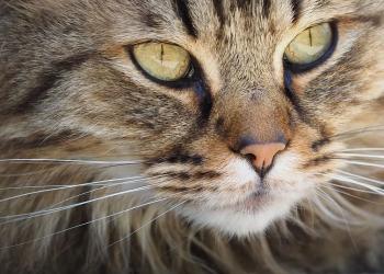 لماذا القطط لديها 9 أرواح أين ولد الإيمان وهل هناك أي حقيقة وراءه
