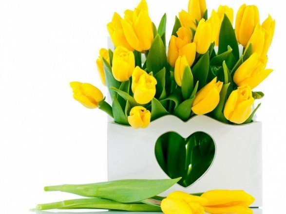 نصائح حول كيفية اختيار الازهار حسب لونها
