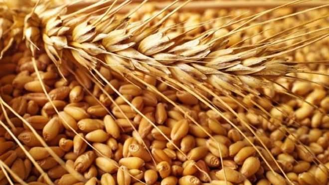 أرقام قياسية و زيادة في إنتاج الحبوب العالمي للعام الثالث على التوالي