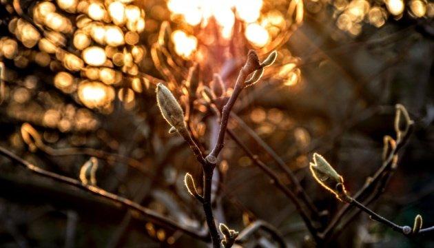 الطقس الدافئ سيعود من جديد في البلاد