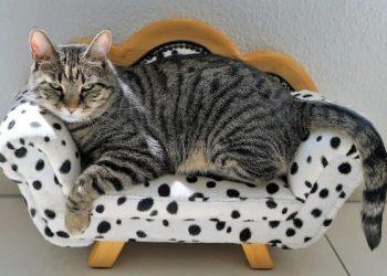 اليابان تعيين قطة رئيسة لقسم الشرطة...فيديو