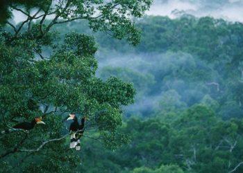 شرطة البيئة في البرازيل تخوض معركة من أجل غابات الأمازون المطيرة
