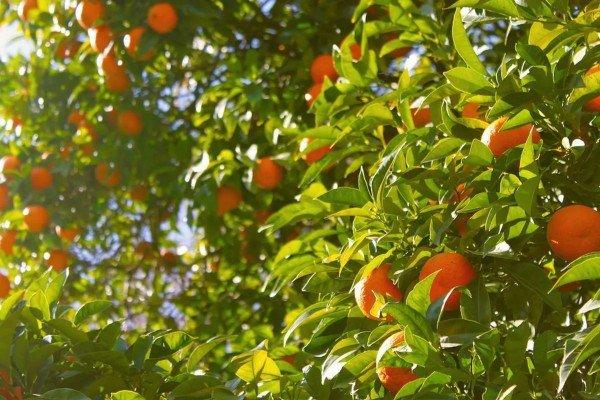 في مدينة إشبيلية الإسبانية، البرتقال مصدر للكهرباء