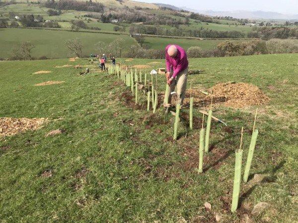 متطوعو العمل المناخي يزرعون 11000 شجرة