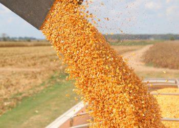 40 مليون طن حجم صادرات اوكرانيا من الحبوب