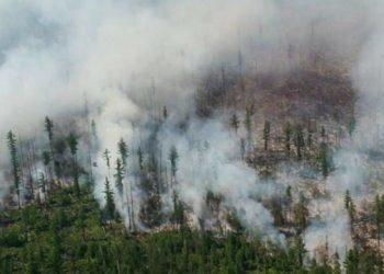 حرق أكثر من مليون هكتار من الغابات في روسيا