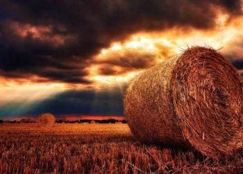 محصول العالم مهدد بتغير المناخ