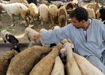 وزارة الزراعة تقدم 12 نصيحة بخصوص أضحية عيد الأضحى