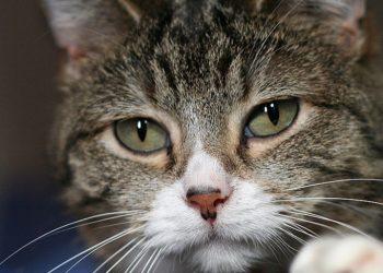 أسطورة: ضرب القطط يجلب لك المتاعب سبع سنين