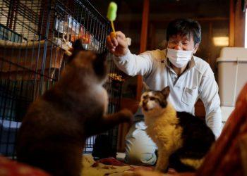 العالم يحتفل بيوم القطط العالمي
