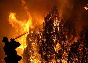 القبض على اثنين من المزارعين في إيطاليا بتهمة إشعال حرائق الغابات عمداً