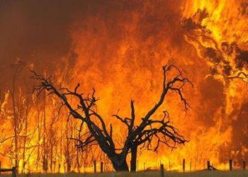 حرائق الغابات تنتشر في الجزائر الآن وموت أربعة أشخاص