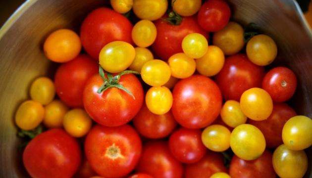 حقن لقاح كورونا داخل الطماطم