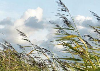 خبراء الأرصاد الجوية يحذرون من هبوب عواصف رعدية ورياح قوية