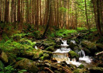 في منطقة جيتومير وضع مسار غابة للجري والمشي على شكل خريطة لأوكرانيا