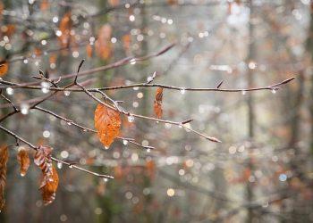 تساقط الثلوج والأمطار في أوكرانيا
