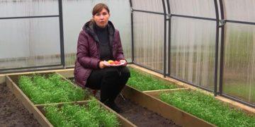 طريقتان لزراعة الطماطم لفصل الشتاء في أكتوبر