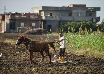 مصر توقع اتفاقيات تعاون مع هيئة أممية بشأن تغير المناخ ومكافحة الآفات